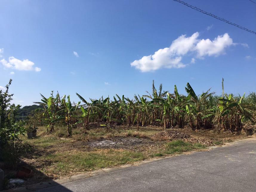 仲座ファーム島バナナ畑