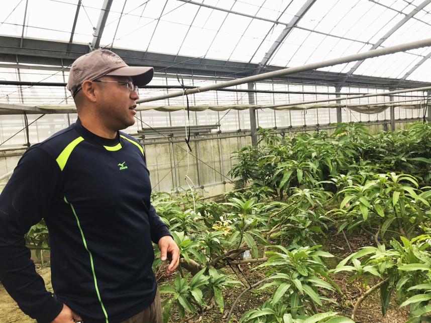 マンゴー栽培について夢を語る仲座ファームさん