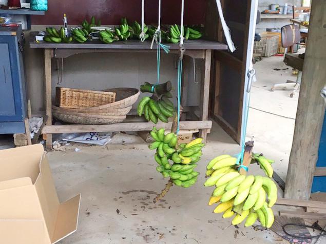 島バナナの追熟
