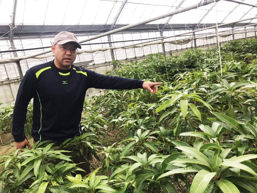マンゴー栽培について説明する仲座ファームさん