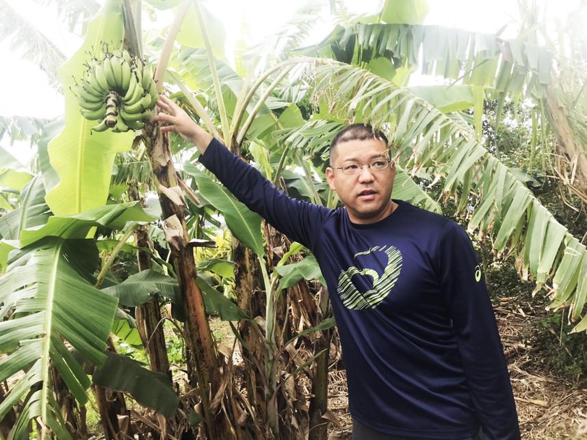 島バナナ 仲座ファーム