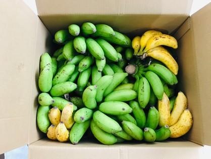 「台風でも倒れなかった島バナナ」の箱詰め