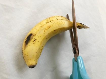 島バナナの頭を切る