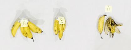 すでに黄色くなった島バナナ